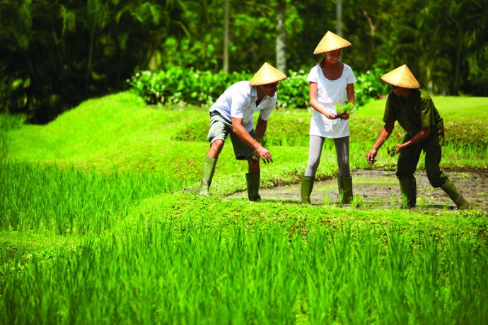 Four seasons Ubud Bali Balinese Rice Farmer